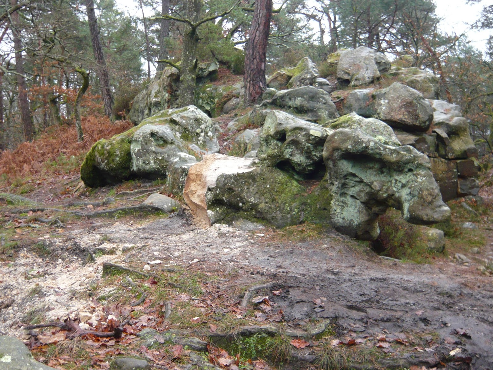 MBF-fontainebleau-rocher-2